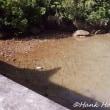 マングローブの群生地