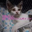 保護猫日記
