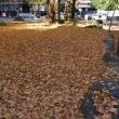 ちょこっと秋散歩  ( 田貫湖と西山本門寺 )