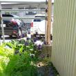 庭のあれこれ、そしてラブラブTime。