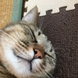 目の前で寝てます。