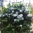 バナナワニ園の植物の多さに驚いた!(@@)☆
