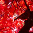 鳥さんと紅葉(動画あり)