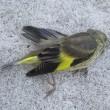 今日はこの鳥