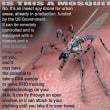 蚊のような都市の昆虫スパイ無人機。