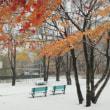 雪が降りてきました たぬき村