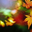 紅葉 (花 4683)