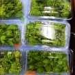 菊芋のサッパリ料理~神奈川県>菊芋生産・販売店  髙城商店
