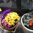 可愛いお花がいっぱい