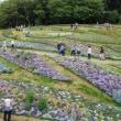 里山ガーデンで花散策