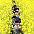菜の花と子ども