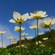 【大雪山国立公園・旭岳情報】旭岳、ありがとうございました。