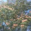 ネムのお花に囲まれた公園!