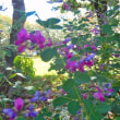 牛久市栄町第1児童公園;萩の花か咲き始めました