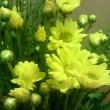 菊の皆さま