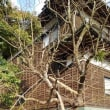 柿の木に折れた竹竿