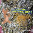 【アンケートに答えて・具付のり『一藻百味』150名様モニタープレゼント!】