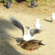 野鳥の餌付けは禁止?