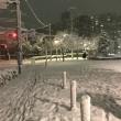 東京の雪、ナメたらあかんぜよ
