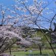 冠嶽神社、桜満開
