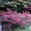 正ちゃんの紅葉狩り(1)柿も美しい