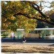 古河総合公園で白柴 小太郎と紅葉狩り