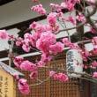 初春の明日香村を歩く