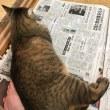 新聞を読み始めると〜〜