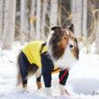 残り少ない雪を楽しみましょう~♪