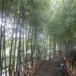 二子玉川 2万本のひまわりと豪雨