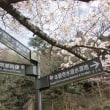 「インクラインの桜」
