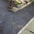 八王子橋まで歩く・猫散歩