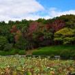 堺市・大泉緑地の風景・・・6