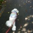 老犬ラスさんとの抱っこ散歩…そして台風26号発生 ( ̄ヘ ̄)ウーン
