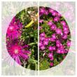 庭の花と野菜~