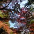 秋を探しに。