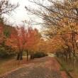 朝の散歩道 紅葉