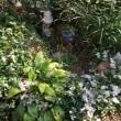 秋晴れの お花