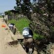 西日本豪雨災害、すでにボランティア募集終了の市町村が出ています。なぜ?