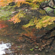 秋の白野江植物公園