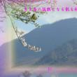 フォト平和の砦575『 生き馬の猛獣となる散る桜 』zrx1301