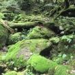 昨年の思い出  〜屋久島の旅②もののけの森〜