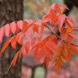 松戸の21世紀の森と広場 紅葉