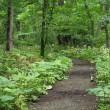 野幌森林公園へ