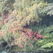 晩秋の風景-2