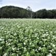 中原の蕎麦団地