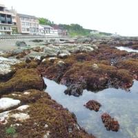 大潮の大洗海岸へ