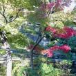 鎌倉の紅葉♪