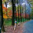 紅葉見ナイト(武蔵丘陵森林公園)