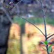 残り秋とカワセミ